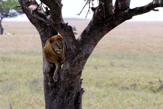 Il re sull'albero