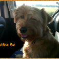 Tred De la Rue- detto Chewbecca, il cagnolino della veterinaria Paola Bianchi