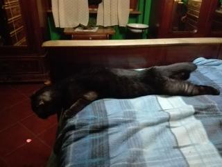Mendel rilassato (3)