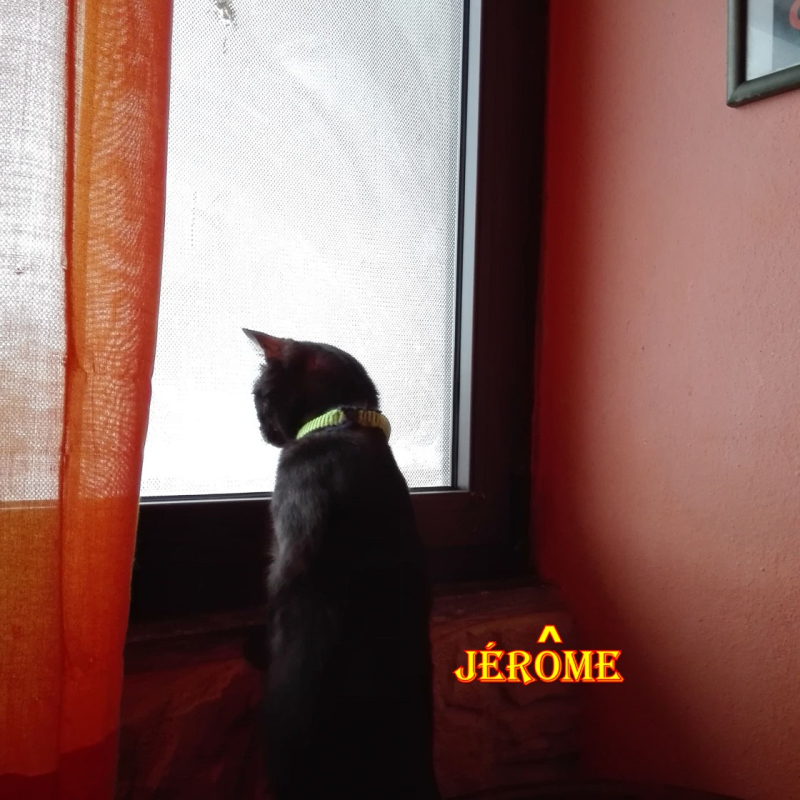 Jerome neve