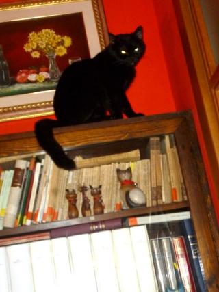 Thor libreria