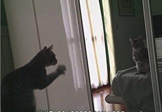 Merlino allo specchio