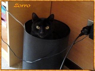 Zorro nome