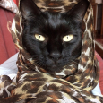 Salem faraone