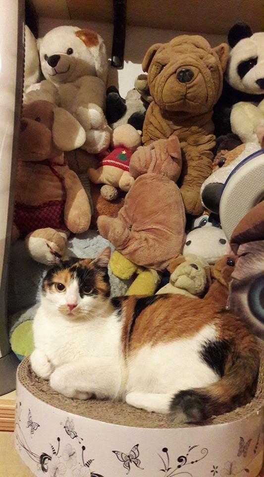 Cherchez la chatte Gelsomina