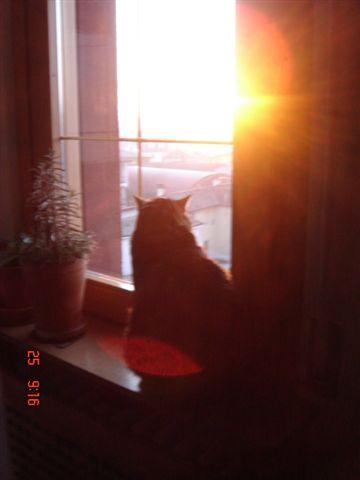 Billo: ecco il sole!