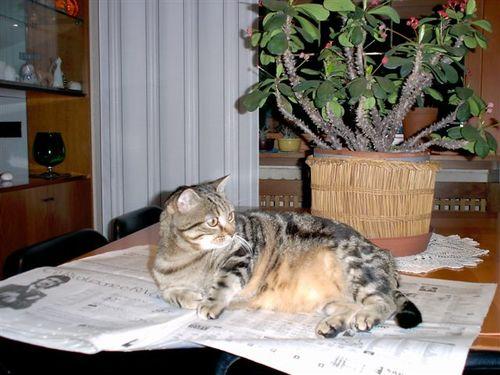 Billo e il giornale