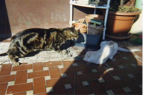 Billo e Gattila (Biscotto)