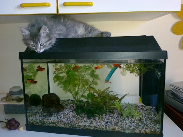 Jack e l'acquario di Sonia