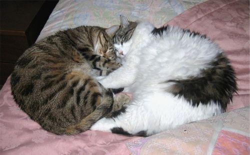 cuore di gatte: Agrippina e Messalina le micie  della mia amica  Tonina