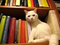 Pallina  la bibliotecaria di Paola Perez