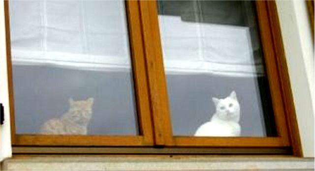 Scodacjut alla finestra: Gabry ricorda Momore di Kaishe