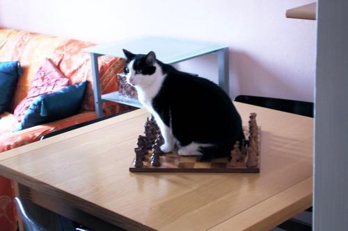 gli scacchi che passione!