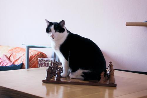 Mina gioca a scacchi