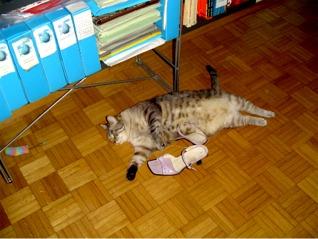 belli i sandali rosa...