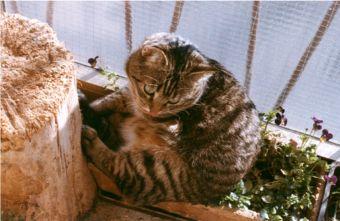 Tigre si dedica al giardinaggio
