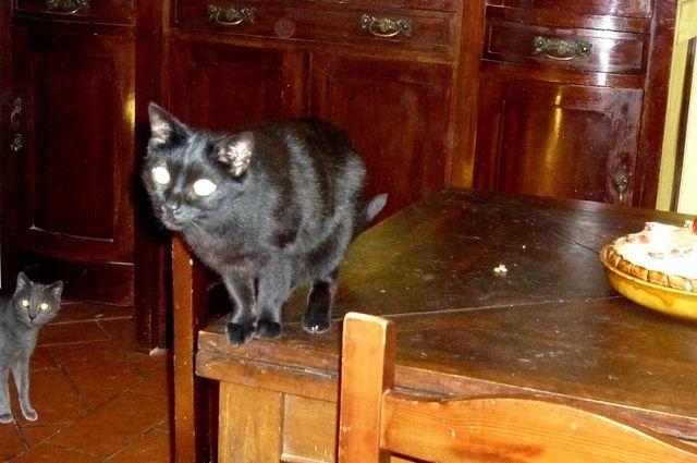 Milky la  gatta nera e  Iotto il micio grigio