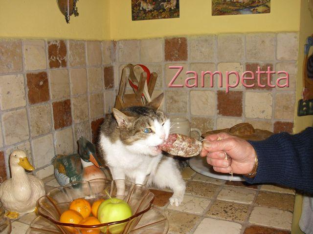 Zampetta 3