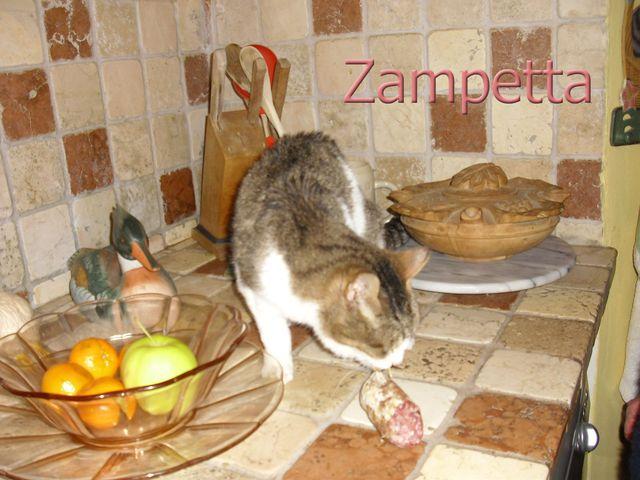 Zampetta