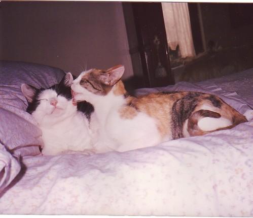 Romeo e Anita