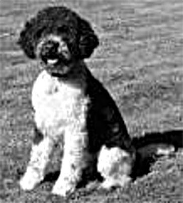Barry 1957