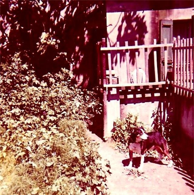 Bobo  1972