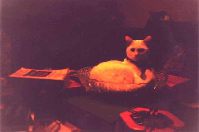 Margot-1999