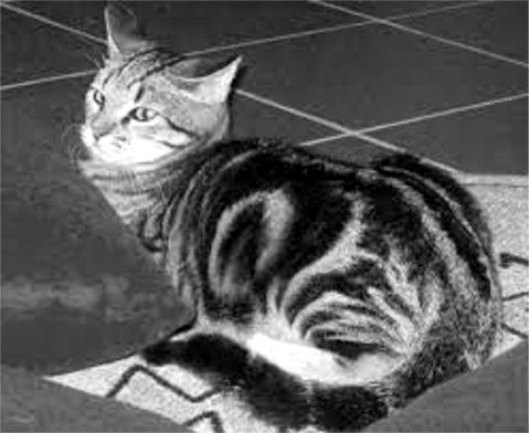 Tigrin  - 1957