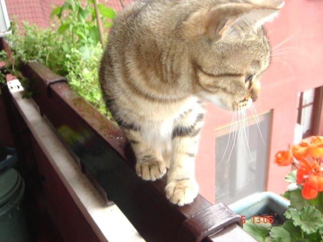 Habibi: equilibrismo  al quarto piano!
