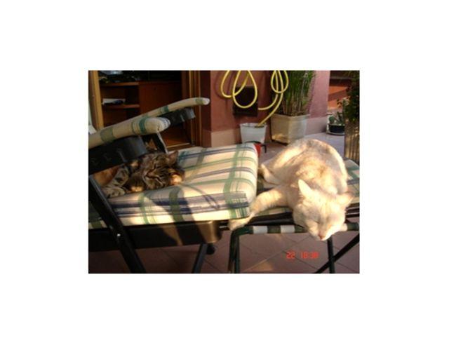Billo e gattila: siesta