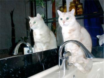 Biscotto e Gattila dopo  la toilette