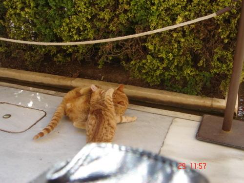 gatti a Granada