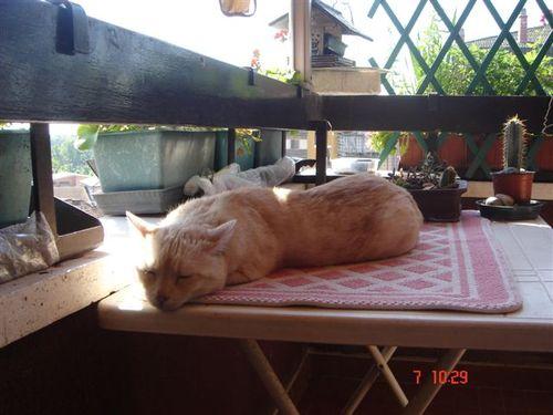 Gattila gatto sornione