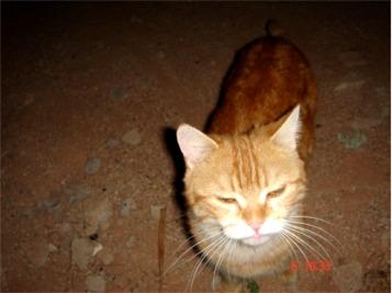 Il gatto di Wadi Rum