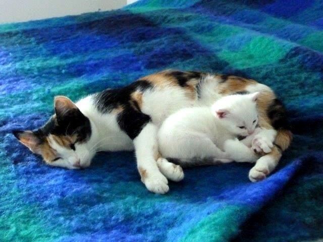 Micia e micetto degli amici di Isabella