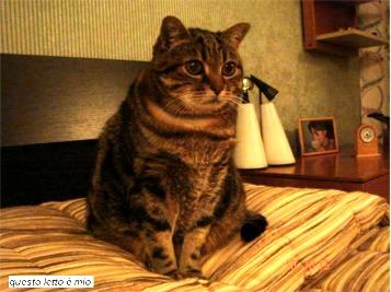Billo:- Questo letto è mio!!!-
