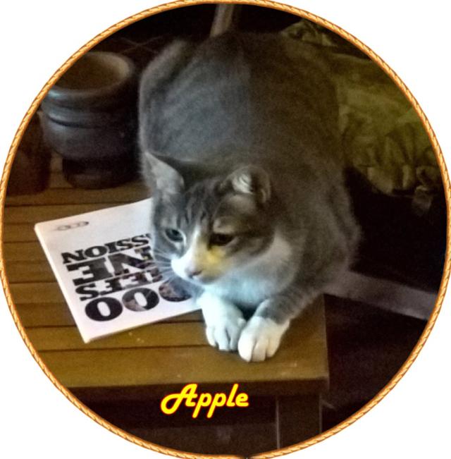 Apple di Andrea