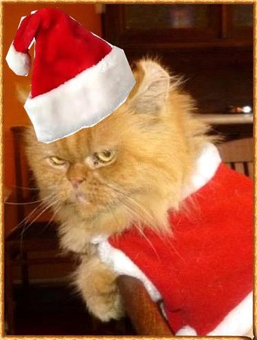 Matisse Gatto Natale