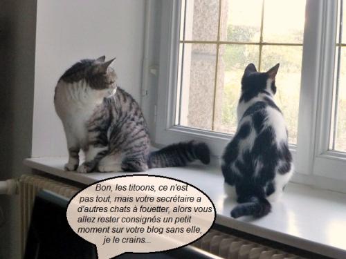 Chipie et Tino