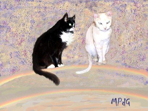 Zeb e Teja - incontro dei due amici sul Ponte dell'Arcobaleno