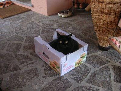 Busti la dolce micia nera che vive con la mamma di pupina