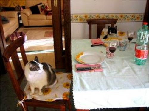 Lilli e Lillo a tavola