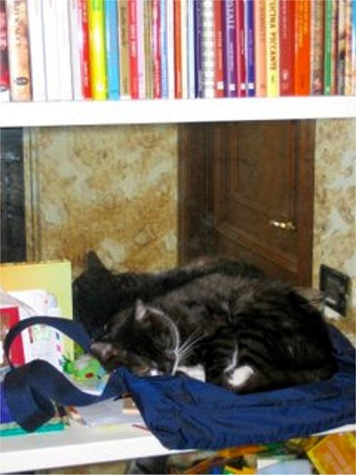 Lillo guardiano della libreria