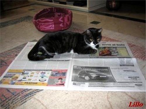 Lillo legge il giornale