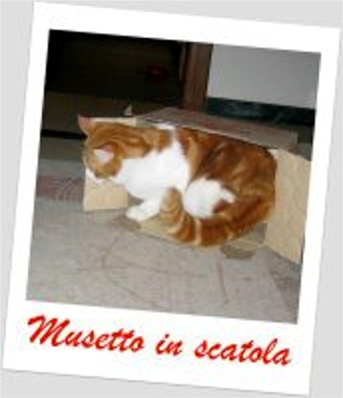 Musetto in scatola