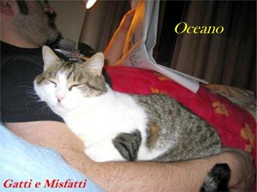 Tatu-Oceano