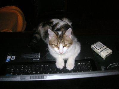 Tina al PC