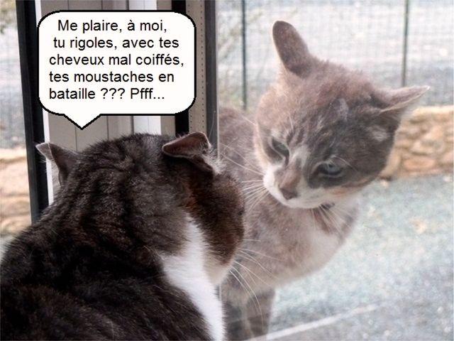 Chipie et son Joli Coeur breton