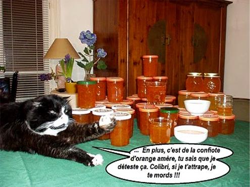 Zeb che vive con Olivier e Colibrì (colei che produce le marmellate!)