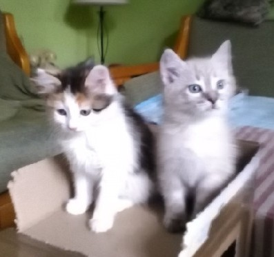 Tricolor col fratellino  Caramel